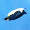 Jocuri Penguin Diving
