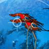 Tintenfische Fangen Spiele
