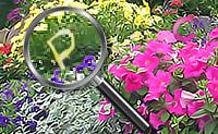 Encontra todas as letras escondidas nestes jardins de flores bonitas. Assim que completes o alfabeto inteiro podes passar para a próxima imagem!