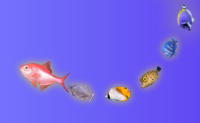 Tente chegar o mais longe que conseguir neste jogo de peixes.