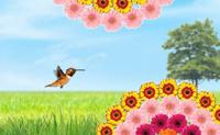 Ajuda este pássaro a apanhas as gotas de tinta o mais rapidamente possível, para encher as barras de cor e completar o nível. Poder incorrer em penalidades de tempo por atingir algum obstáculo próximo.