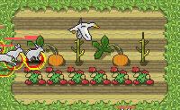 Estás a contratar um pequeno exército de pássaros para proteger a tua plantação atirando nos animais que lá estão para a comer. Quanto mais pontos tiveres no fim do nível, mais fortes serão os pássaros que podes contratar. Podes também tornar os teus pássaros invisíveis pressionando o botão 'visibilidade', se isso te torna o jogo mais fácil.
