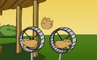 Hamsters volants