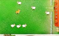 Cattura le pecore