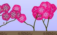 Bitki Yetiştirmek 2