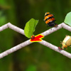 Wandernde Insekten Spiele