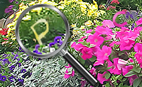 Letras nos jardins das flores