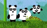 Trei ursi panda