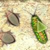 Jocuri Războiul insectelor