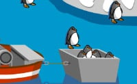 Pinguin fangen