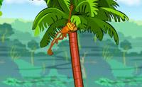 Scimmia acrobatica