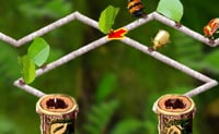 Insectos Ambulantes