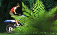Quad dans la jungle