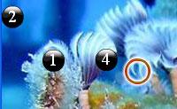 Unterschiede unter Wasser