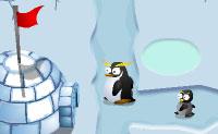 Pinguïnoorlog