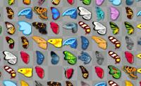 Vlindervreugde