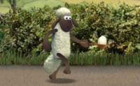 Sheep Chicken N Spoon